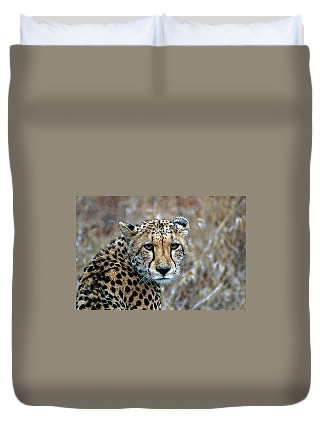 Acinonyx Duvet Cover featuring the photograph The Cheetah Stare by Paul Fell