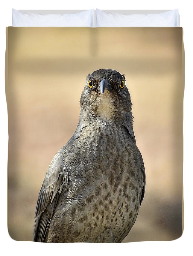 Curve-billed Thrasher Duvet Cover featuring the photograph The Eyes Have It by Saija Lehtonen