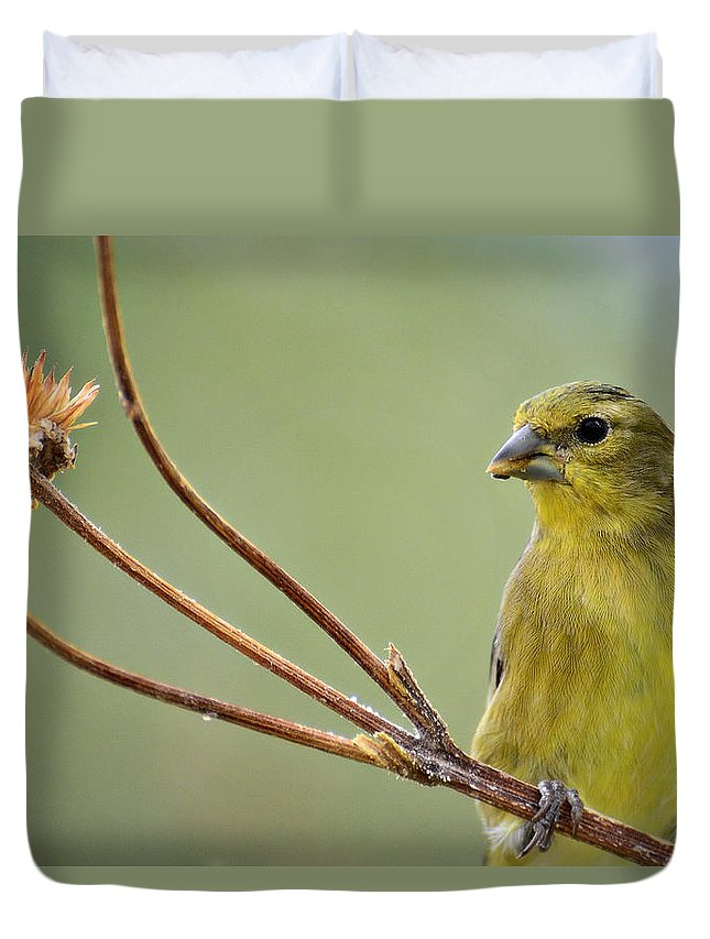 Lesser Gold Finch Duvet Cover featuring the photograph The Finch by Saija Lehtonen
