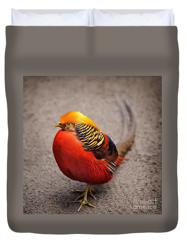 Golden Pheasant Duvet Cover featuring the photograph The Golden Pheasant by Ari Salmela