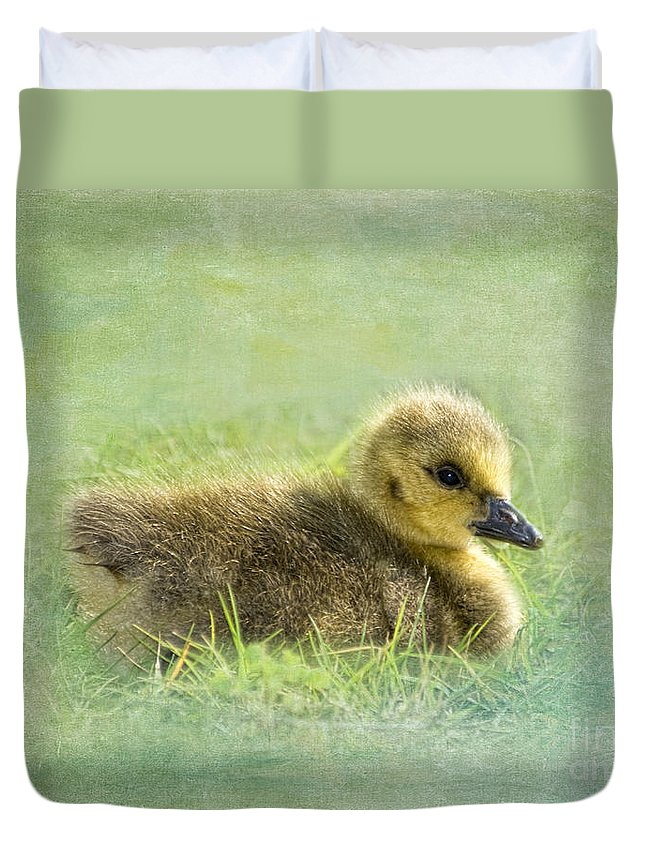 Canada Goose Duvet Cover featuring the photograph The Gosling by Betty LaRue