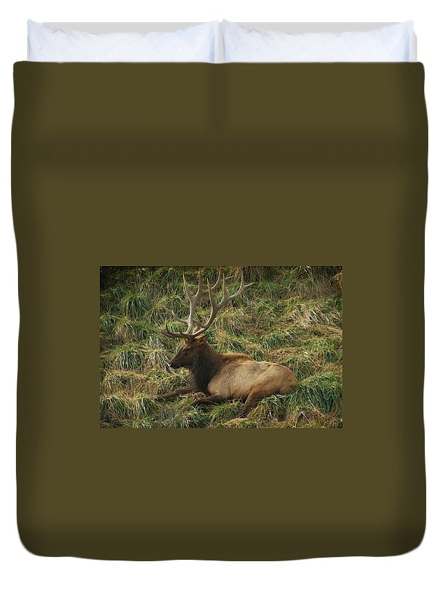 Elk Duvet Cover featuring the photograph The King by Trish Tritz