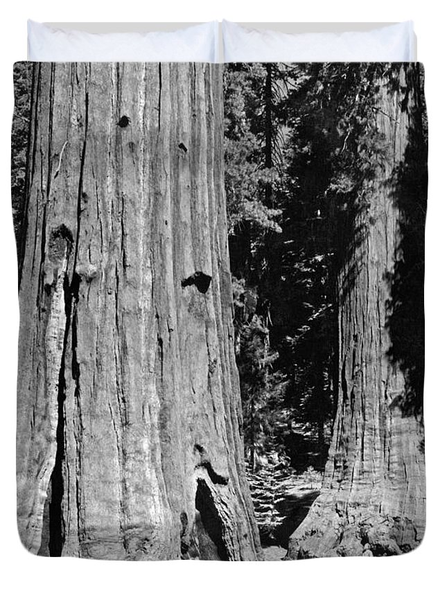 1035-737 Duvet Cover featuring the photograph The Mariposa Grove In Yosemite by Underwood Archives
