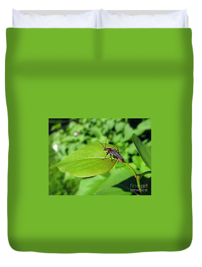 Nature Duvet Cover featuring the photograph The Rednecked Bug On The Leaf by Ausra Huntington nee Paulauskaite