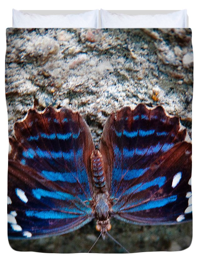 Butterfly Duvet Cover featuring the photograph The Royal Blue Butterfly by David Patterson