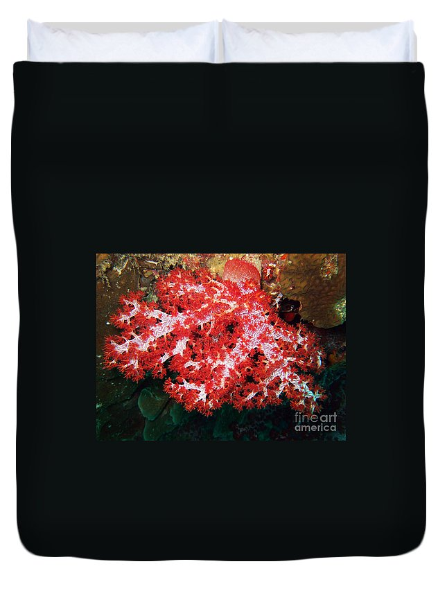 Adventure Duvet Cover featuring the photograph The Scarlet Soft Coral. Similan Islands by MotHaiBaPhoto Prints