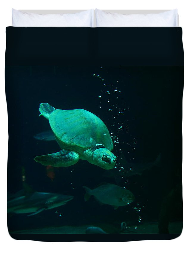 Turtles Duvet Cover featuring the photograph The Sea Turtle Dives by Jeff Swan