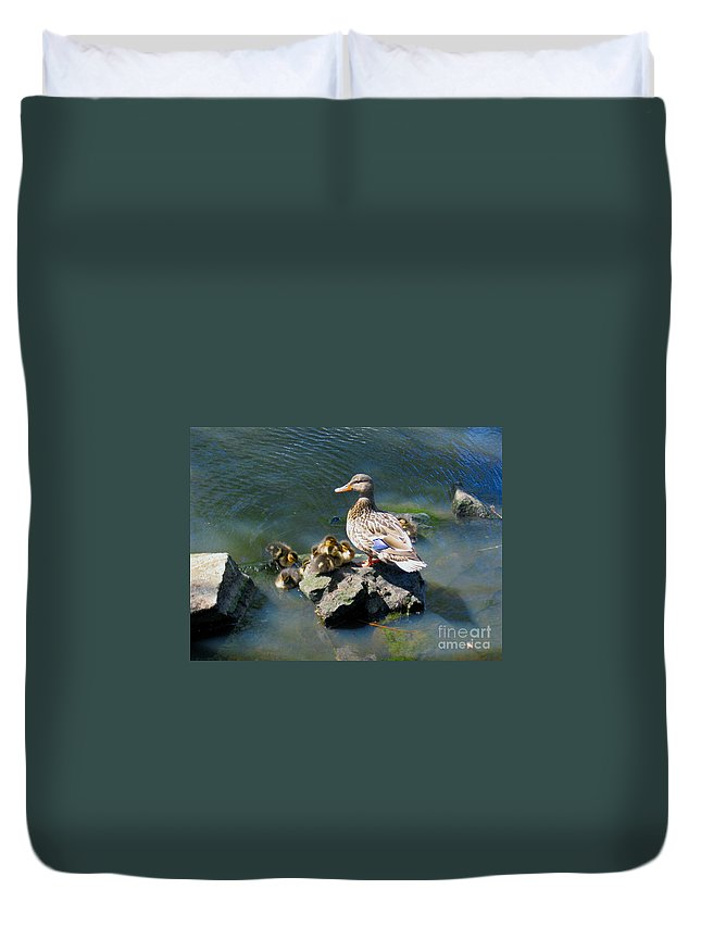 Ducks Duvet Cover featuring the photograph The Swimming Lesson by Rory Sagner