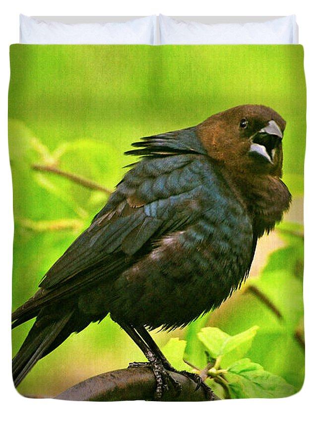 Cowbird Duvet Covers