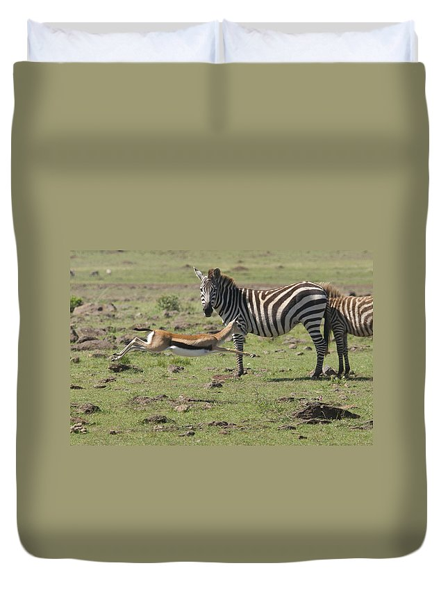 Africa Duvet Cover featuring the photograph Thomson's Gazelle Running At Full Speed by Howard Kennedy