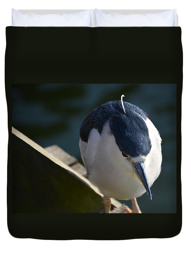 Bird Duvet Cover featuring the photograph Thoughtful Bird by Maggy Marsh