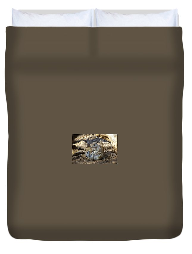 Oundtail Ground Squirrels Duvet Cover featuring the photograph Tickle Me by Saija Lehtonen