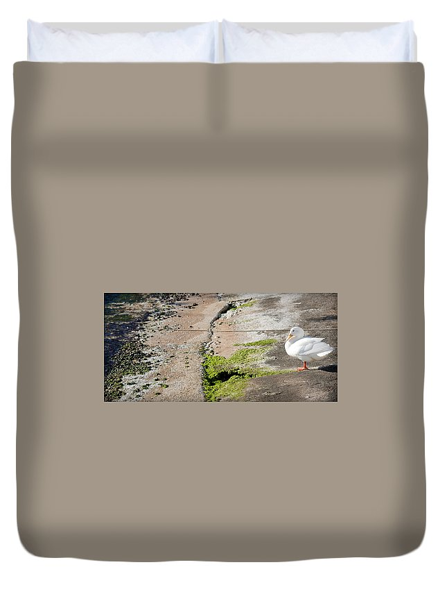 Sea Duvet Cover featuring the photograph to swim or not to swim - A beautiful white duck ready to get into the sea or not by Pedro Cardona Llambias