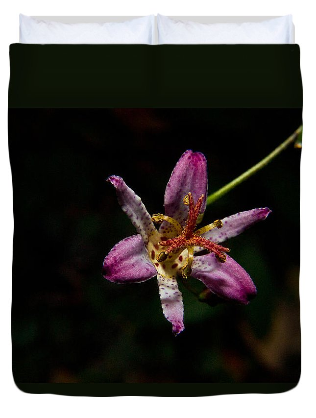 Common Duvet Cover featuring the photograph Toad Lilly 2 by Douglas Barnett