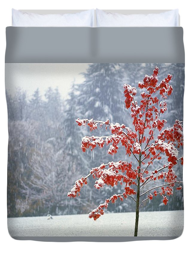 Winter Duvet Cover featuring the photograph Tree In The Winter by Natural Selection Craig Tuttle