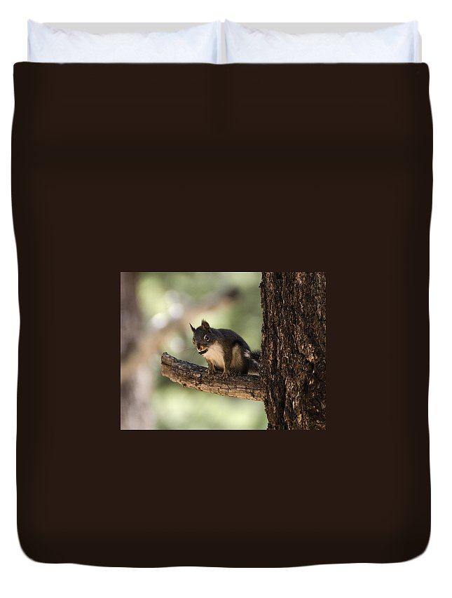 Douglas Duvet Cover featuring the photograph Tree Squirrel by Dianne Phelps