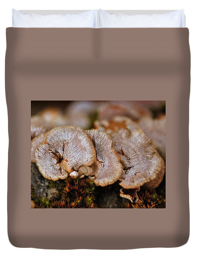 Mushrooms Duvet Cover featuring the photograph Trio by Susan Capuano