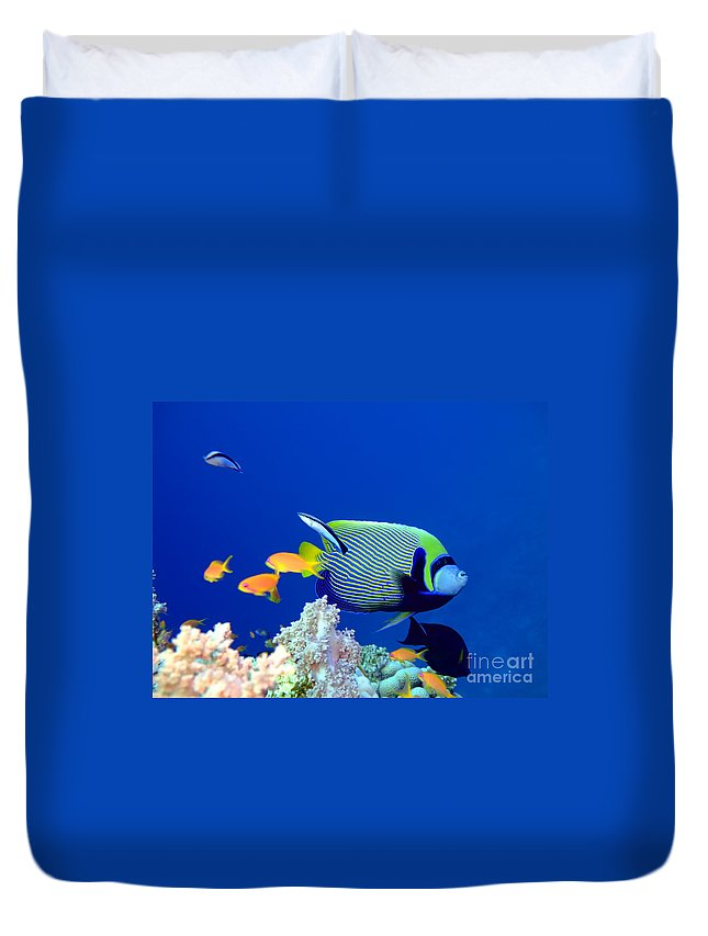 Angel Duvet Cover featuring the photograph Tropical Fish Angelfish by MotHaiBaPhoto Prints
