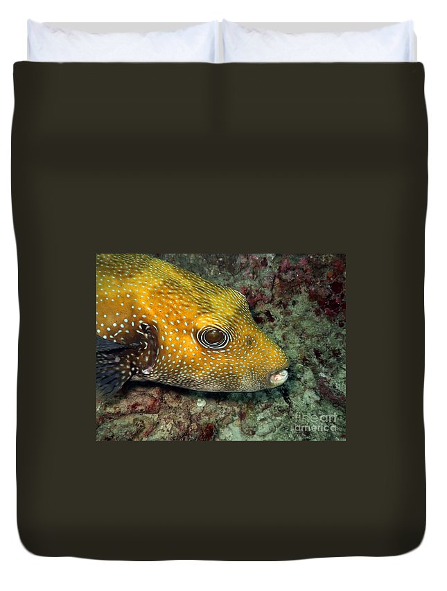 Activities Duvet Cover featuring the photograph Tropical Fish by MotHaiBaPhoto Prints