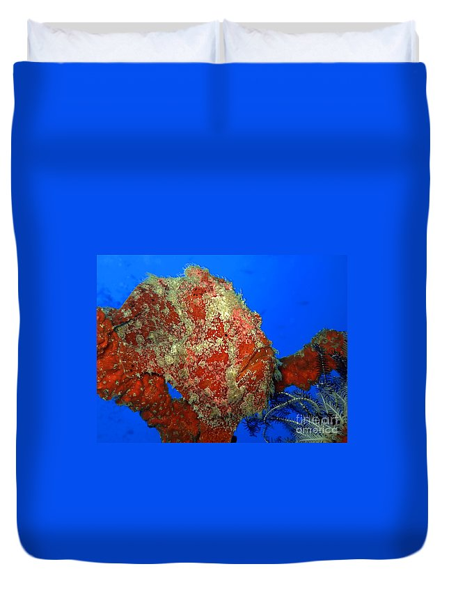 Scorpion-fish Duvet Cover featuring the photograph Tropical Fish Stone-fish by MotHaiBaPhoto Prints