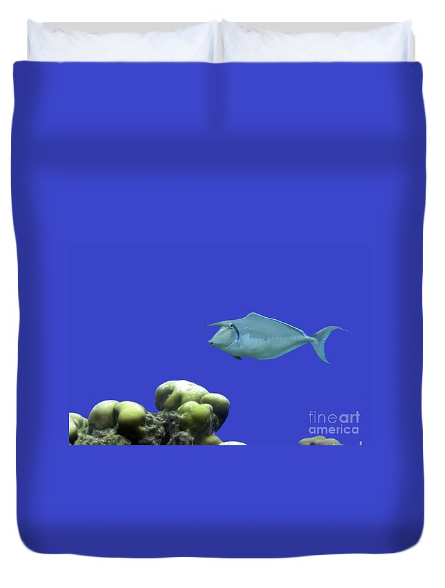Unicornfish Duvet Cover featuring the photograph Tropical Fish Unicornfish. by MotHaiBaPhoto Prints