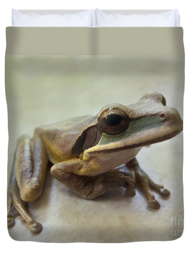 Nature Duvet Cover featuring the photograph Tropical Tree Frog II by Heiko Koehrer-Wagner