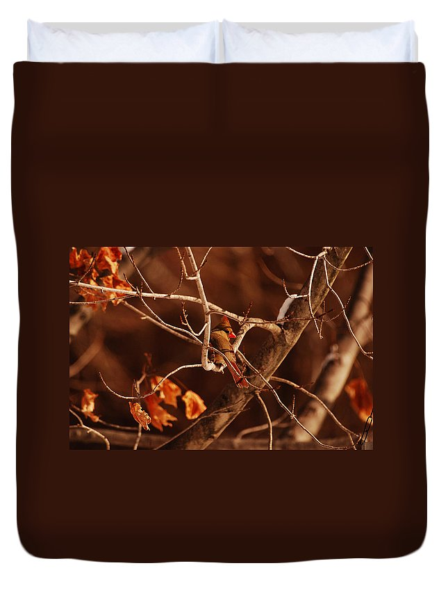 Cardinal Duvet Cover featuring the photograph Trying To Blend In by Lori Tambakis
