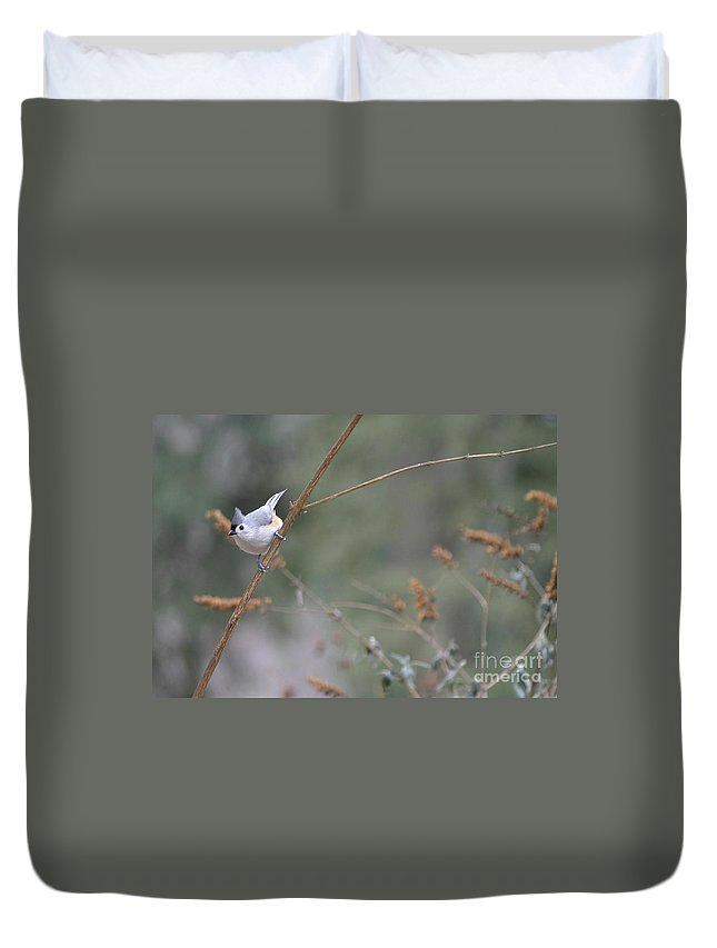 Birds Duvet Cover featuring the photograph Tufted Titmouse 2 by Living Color Photography Lorraine Lynch