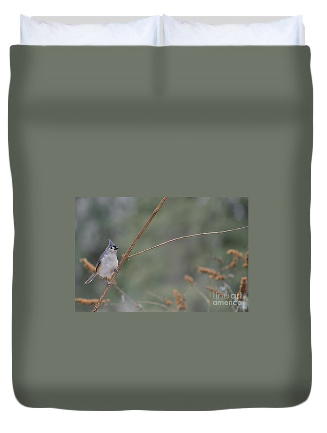 Bird Duvet Cover featuring the photograph Tufted Titmouse by Living Color Photography Lorraine Lynch