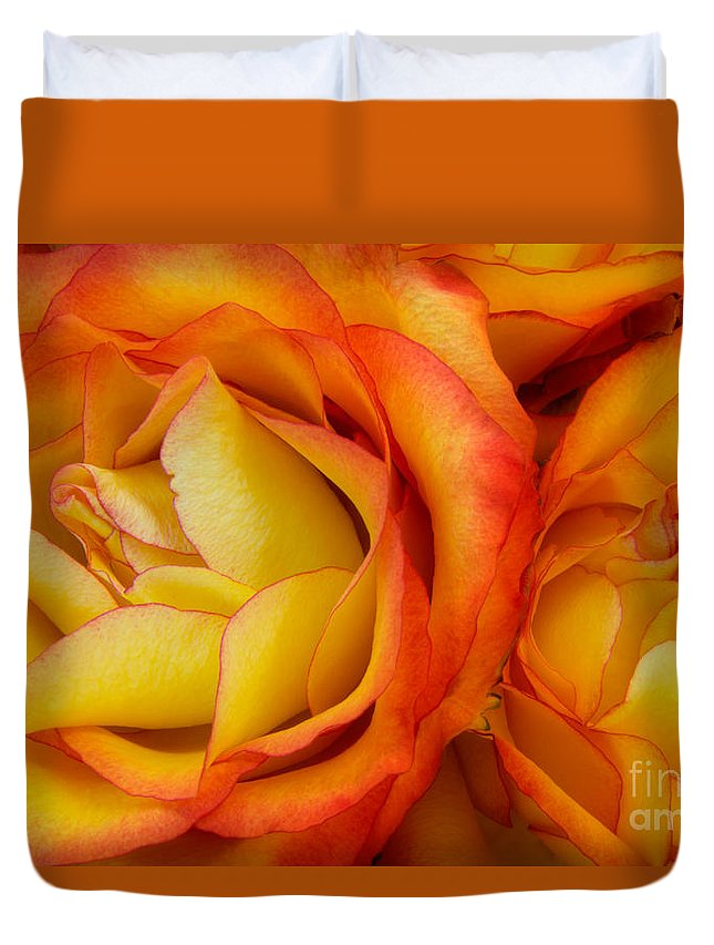 Rose Duvet Cover featuring the photograph Twin Yellow Roses by Ann Garrett