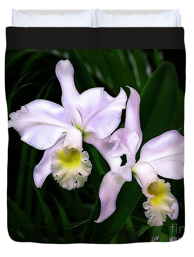 Cattleya Duvet Cover featuring the photograph Two Cattleyas by Judi Bagwell