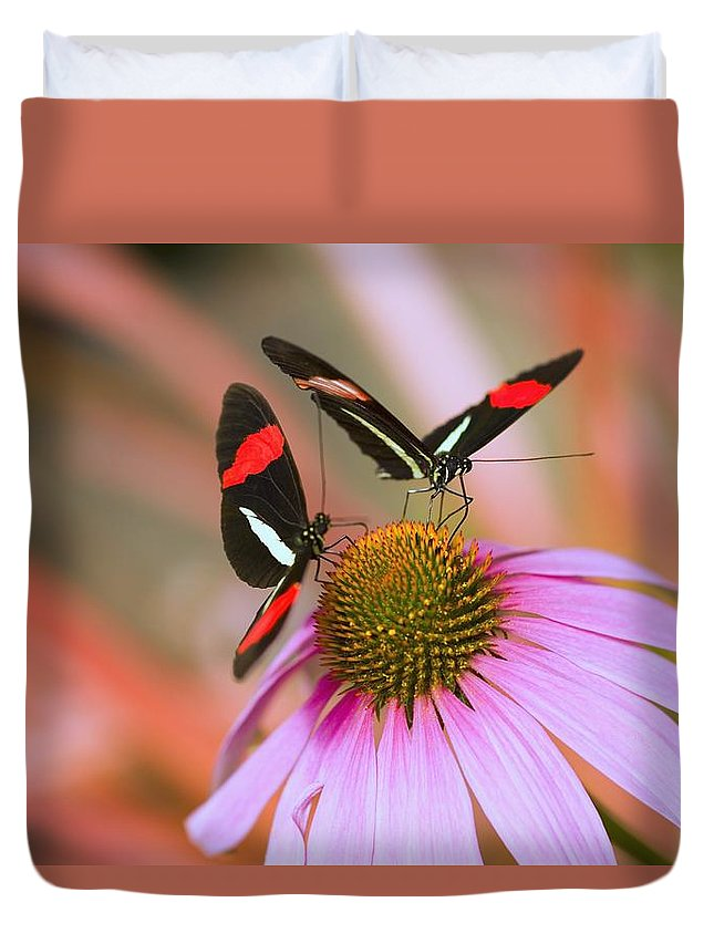 Echinacea Duvet Cover featuring the photograph Two Colorful Butterflies On Cone Flower by Craig Tuttle