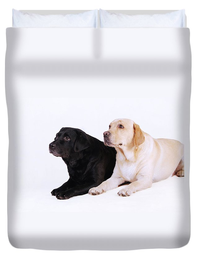 Animal Duvet Cover featuring the photograph Two Labs by Waldek Dabrowski