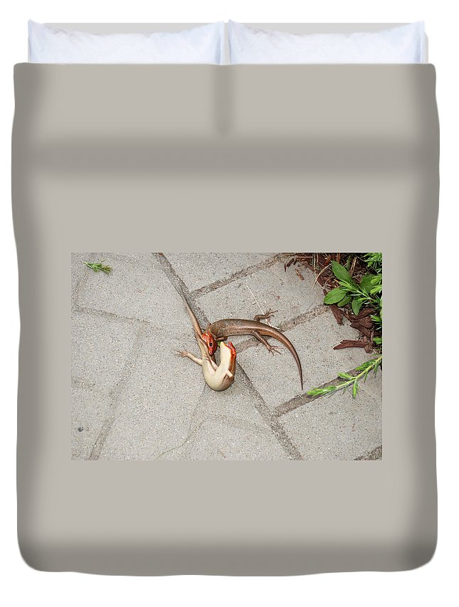 Wrestling Duvet Cover featuring the digital art Two Lizards Are Fighting by Eva Kaufman