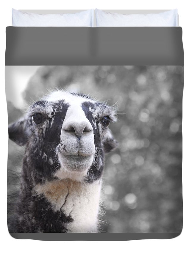 Lama Duvet Cover featuring the photograph Two-toned by Douglas Barnard