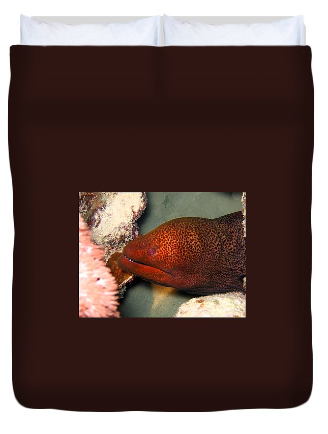 Animals Duvet Cover featuring the photograph Undulated Moray Eel by MotHaiBaPhoto Prints