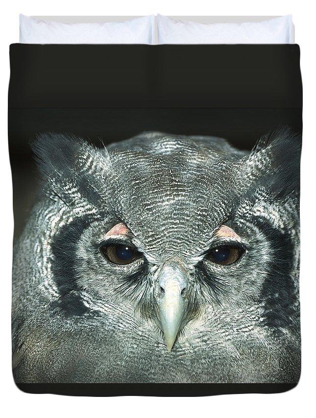Mp Duvet Cover featuring the photograph Verreauxs Eagle-owl Bubo Lacteus by Konrad Wothe