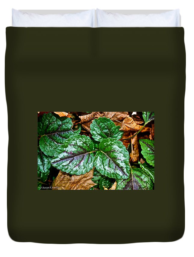 Outdoors Duvet Cover featuring the photograph Vibrant Ground Cover by Susan Herber