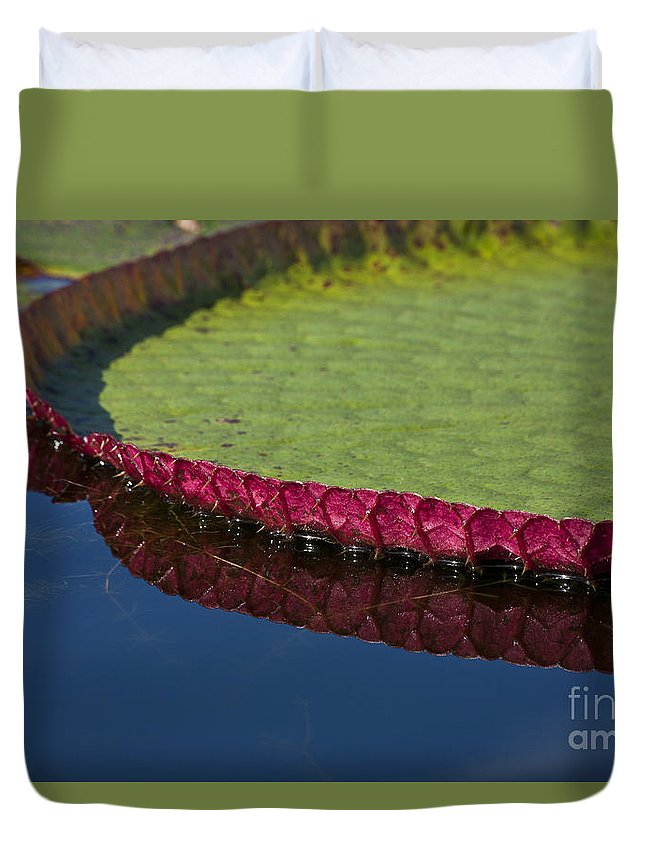 Victoria Duvet Cover featuring the photograph Victoria Amazonica Leaf by Heiko Koehrer-Wagner