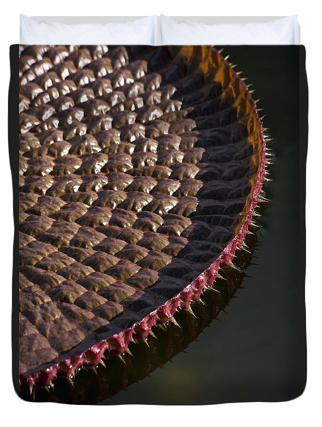 Victoria Duvet Cover featuring the photograph Victoria Amazonica Leaf Vertical by Heiko Koehrer-Wagner