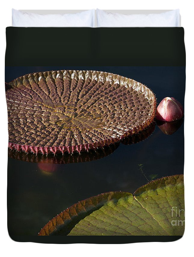 Victoria Duvet Cover featuring the photograph Victoria Amazonica Leaves by Heiko Koehrer-Wagner