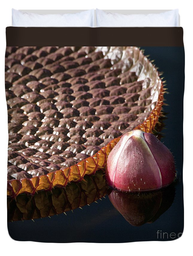 Victoria Duvet Cover featuring the photograph Victoria Amazonica Giant Water Lily by Heiko Koehrer-Wagner