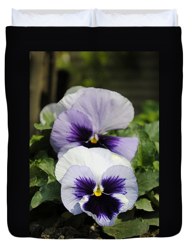 Flower Duvet Cover featuring the photograph Violet Pansies Flower by Sumit Mehndiratta