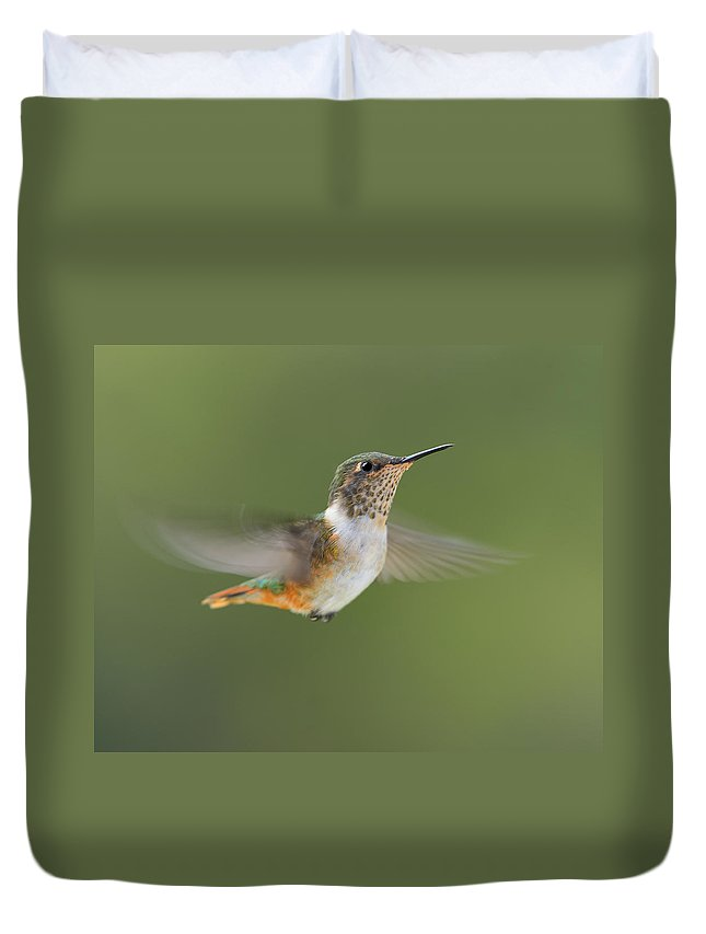 Volcano Hummingbird Duvet Cover featuring the photograph Volcano Hummer by Tony Beck