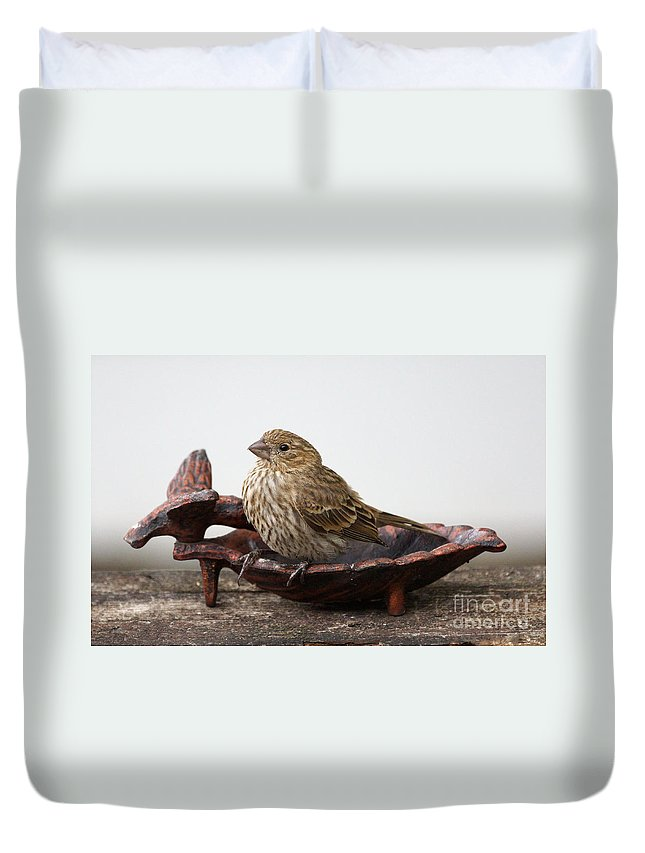 House Finch Duvet Cover featuring the photograph Waiting For Food by Lori Tordsen
