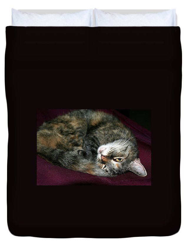 Cat Duvet Cover featuring the photograph Watching On The Sly by Laurel Talabere