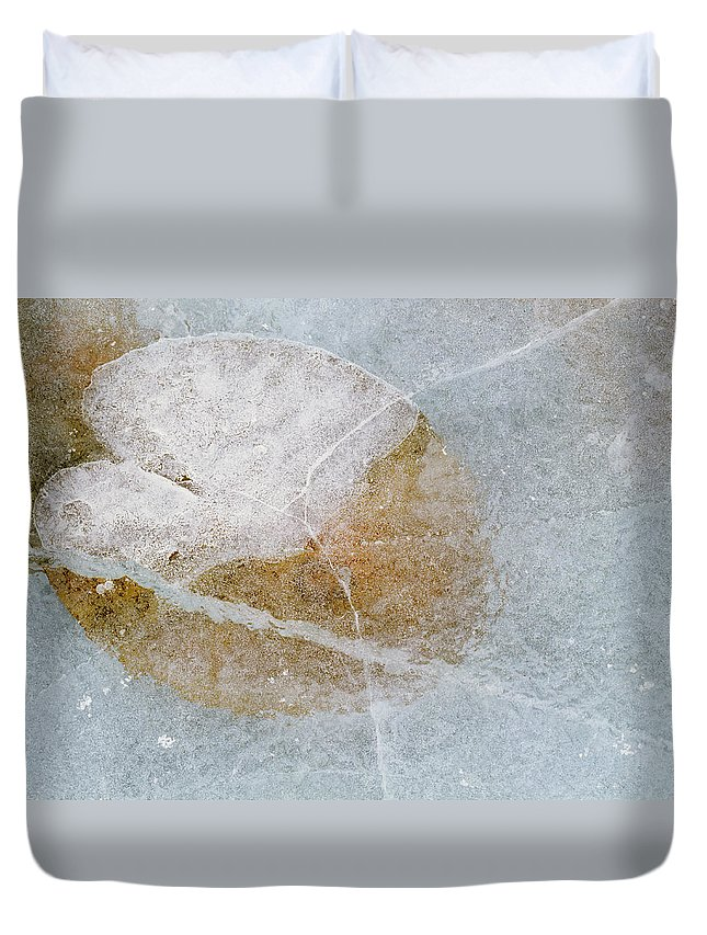 Light Duvet Cover featuring the photograph Water Lily Leaf In Ice, Boggy Lake by Darwin Wiggett