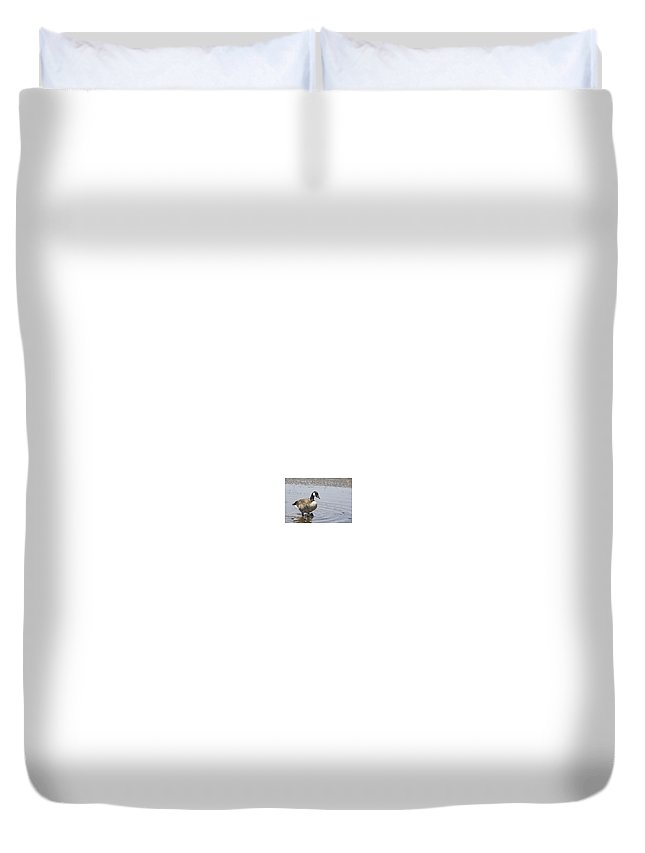 Canadian Goose Duvet Cover featuring the photograph Water Wading by Douglas Barnard