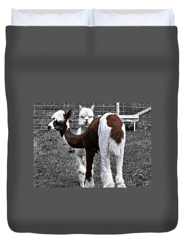 Llamas Duvet Cover featuring the photograph What Are You Looking At by Burney Lieberman