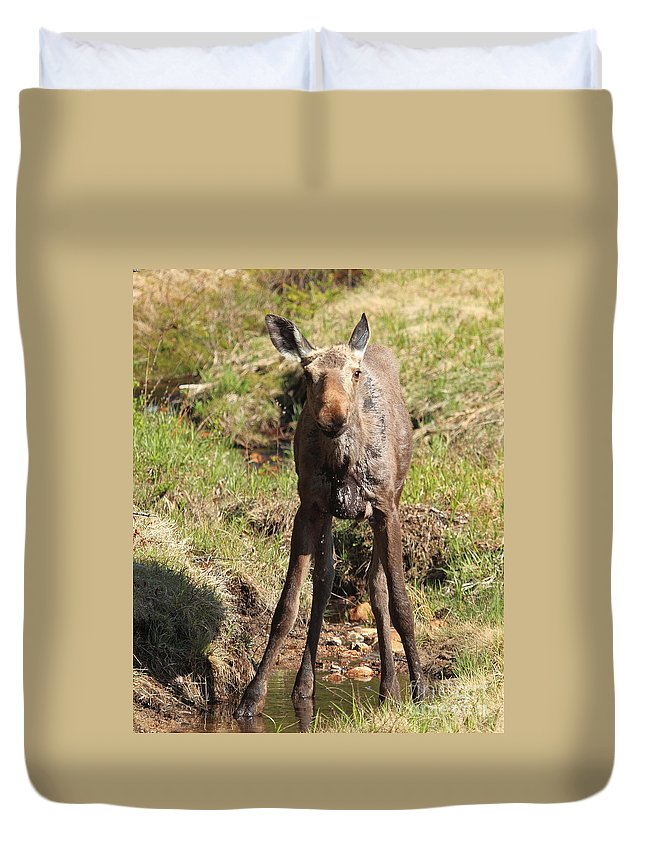 Moose Duvet Cover featuring the photograph What by Lloyd Alexander